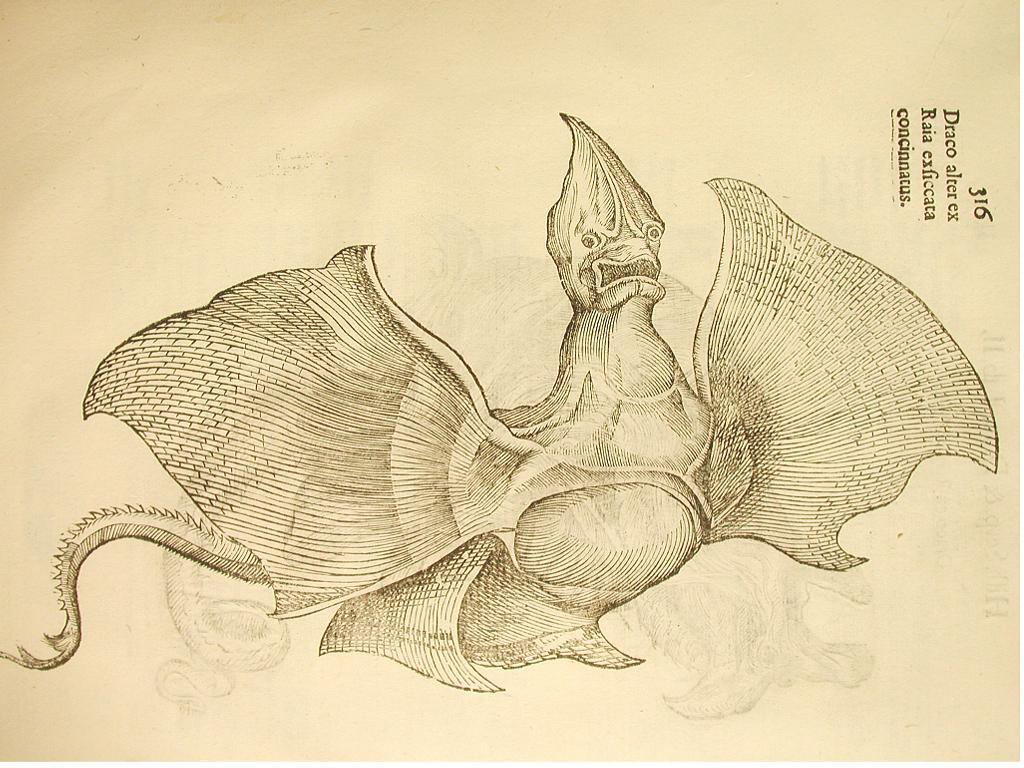 falso-dragon-segun-ulisse-aldrovandus