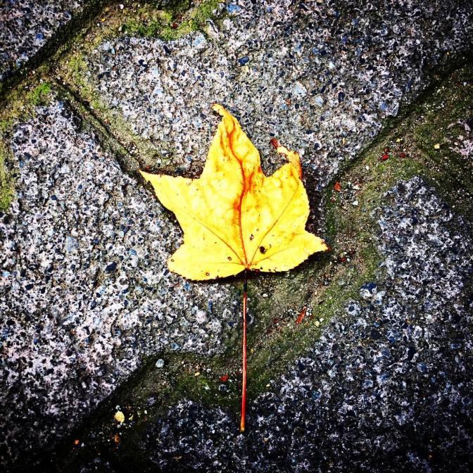 el-otoo-est-cerca-autumnleaves-nature_29558803391_o