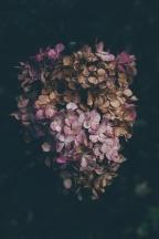 Tres propuestas de lecturas de amor mientras acontece el Fin del Mundo