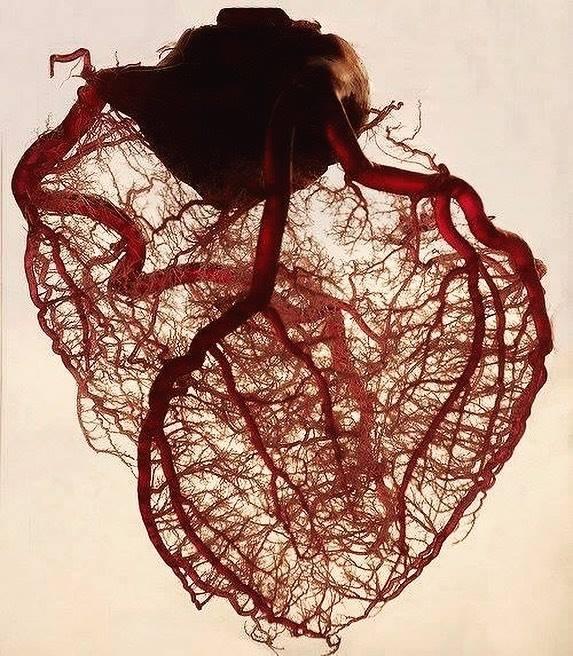 Sangre del corazón